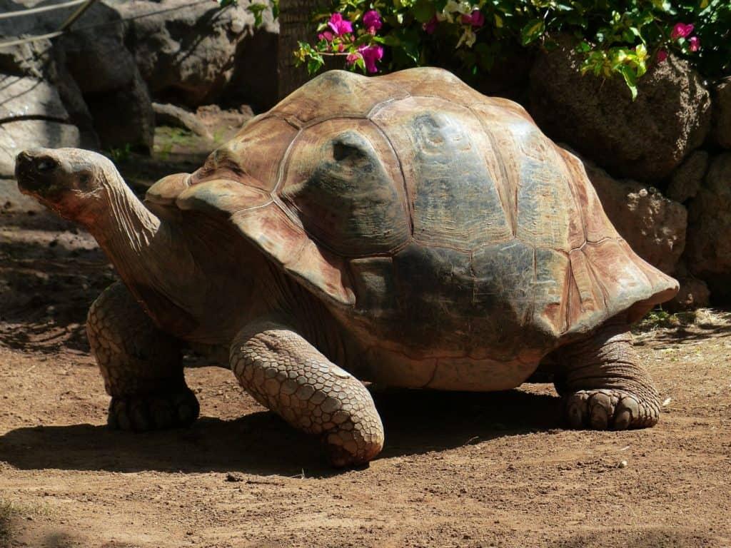 Boomer e il valore dell'esperienza: tartaruga con un grosso carapace.