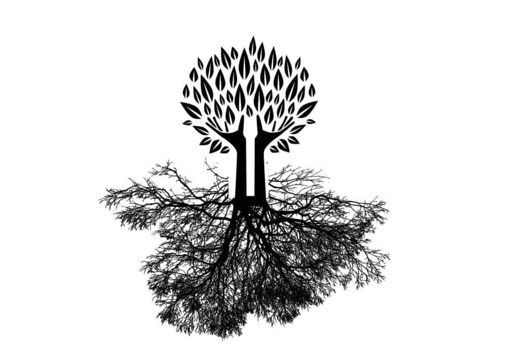 Connessioni sotterranee delle radici rispecchiate della connessioni visibili dei rami.