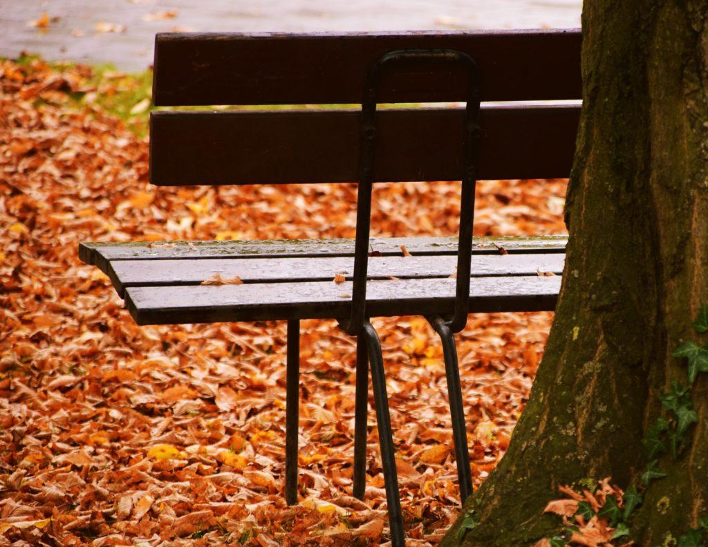 Panchina vuota appoggiata a un albero su un prato coperto di foglie secche.